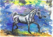 Coloriage Cheval Pur Sang.Cheval Pur Sang Arabe Coloriage Galerie Creation